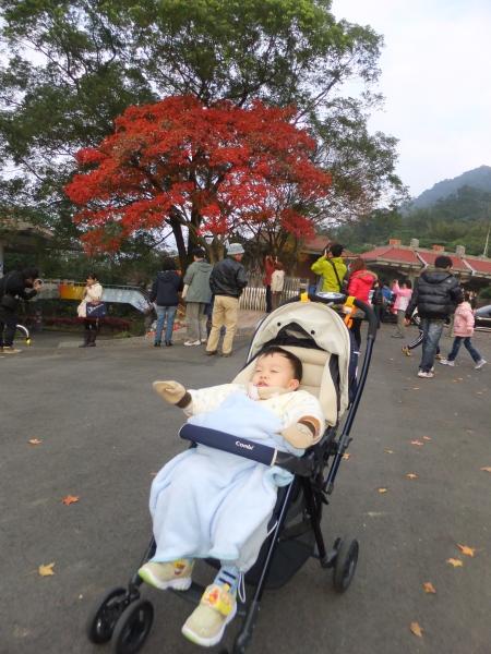 2012_0101_mark_063.jpg