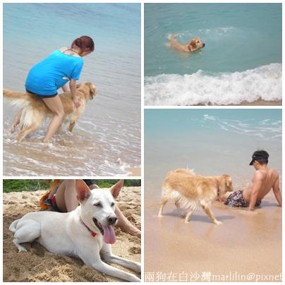 兩狗在白沙灣.jpg