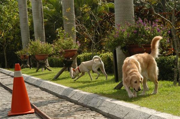 兩狗在知本老爺.JPG