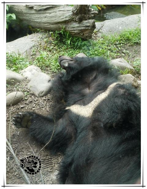 動物園-10.jpg
