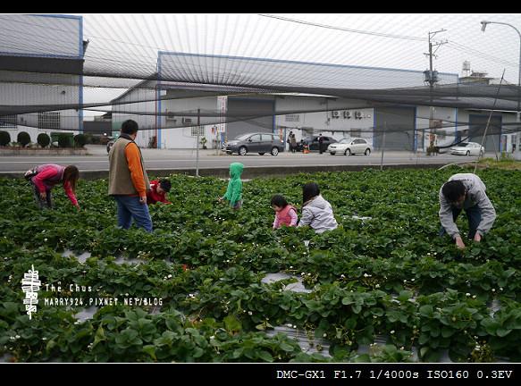 草莓世界-4