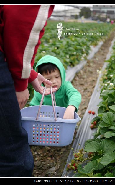 草莓世界-5