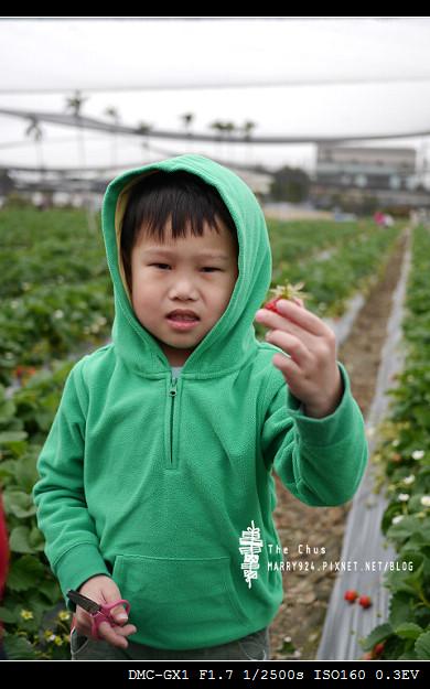 草莓世界-6