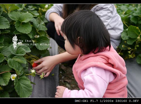 草莓世界-7