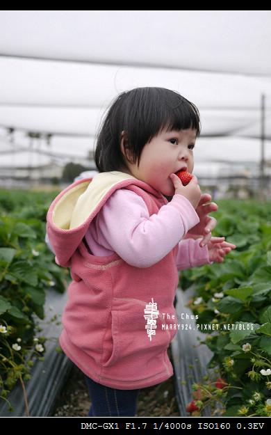 草莓世界-8