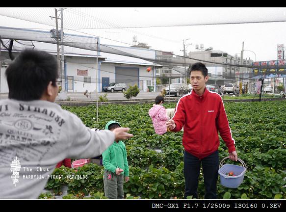 草莓世界-13