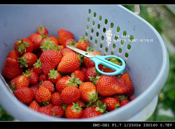 草莓世界-19