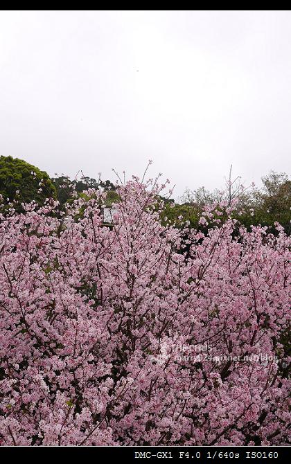 2012天元宮-29