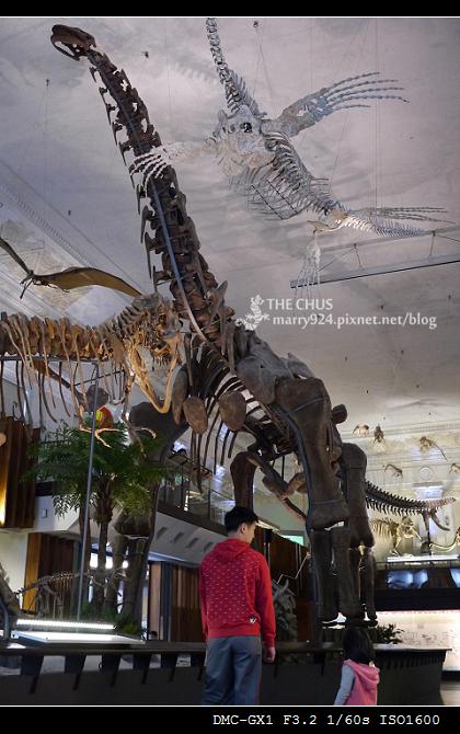 恐龍展-11