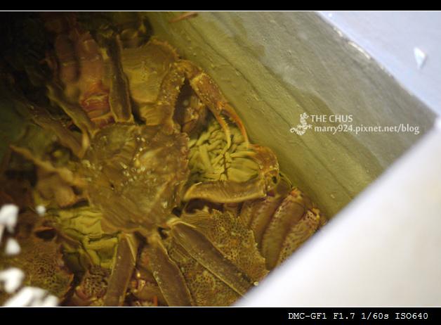 松葉蟹-1