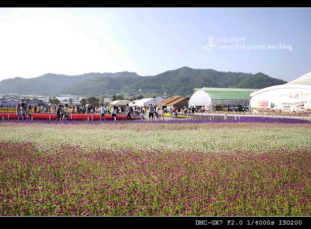 2015新社花海-15.jpg