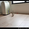 曼赤肯-6.jpg