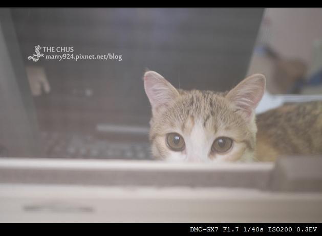 貓-1.jpg