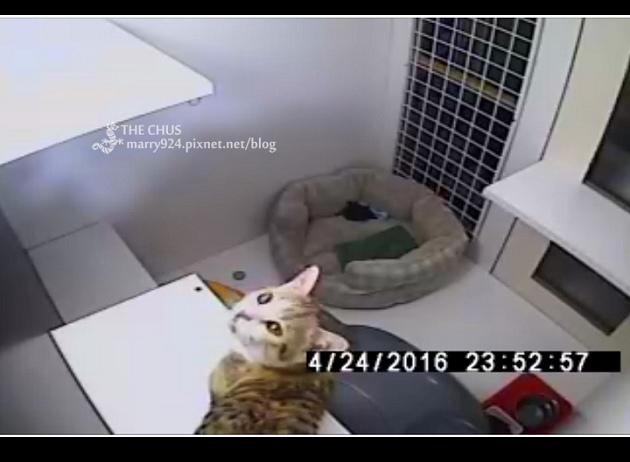 貓-9.jpg