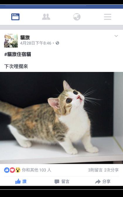 貓-16.jpg
