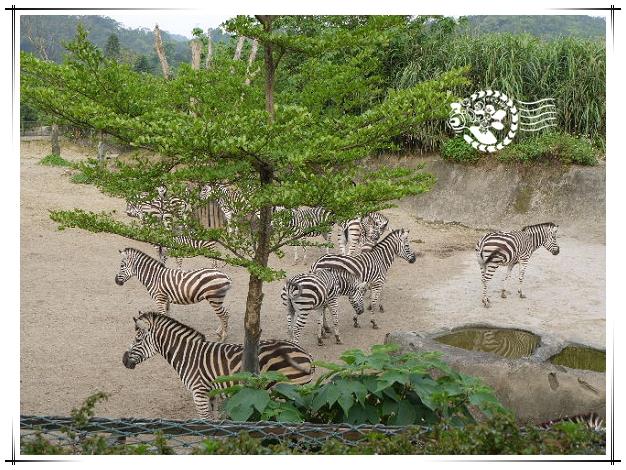 動物園-18.jpg