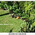 bali iguana-8.jpg