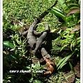 bali iguana-9.jpg