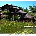 bali iguana-1.jpg