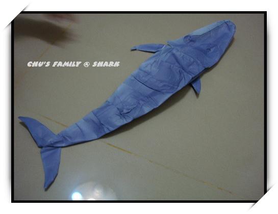 鯊魚-1.jpg