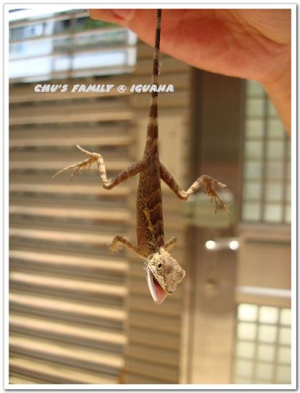 蜥蜴2-7.jpg