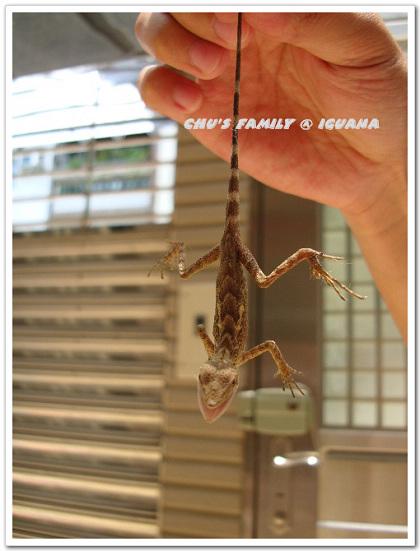 蜥蜴2-8.jpg
