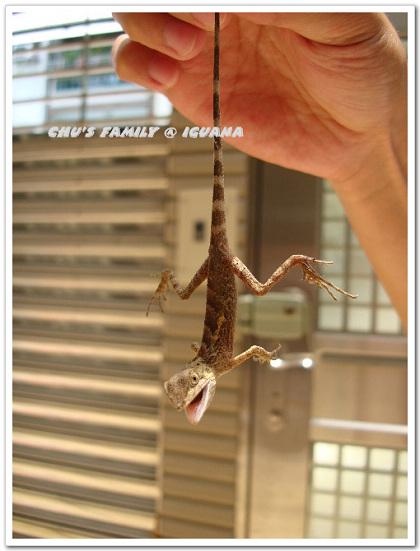 蜥蜴2-9.jpg