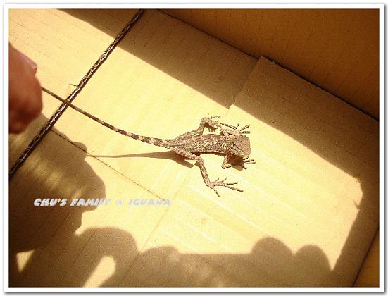 蜥蜴2-11.jpg