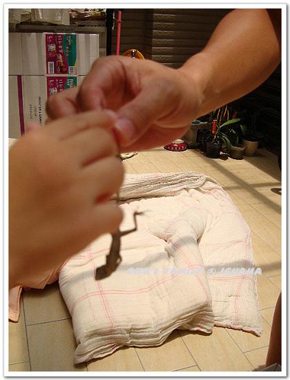 蜥蜴2-12.jpg