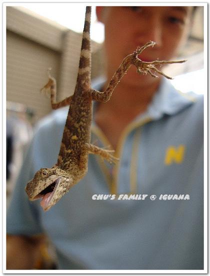 蜥蜴-3.jpg