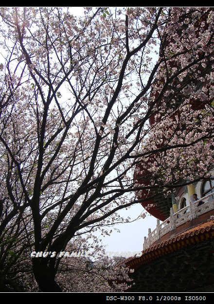 天元宮-25.jpg