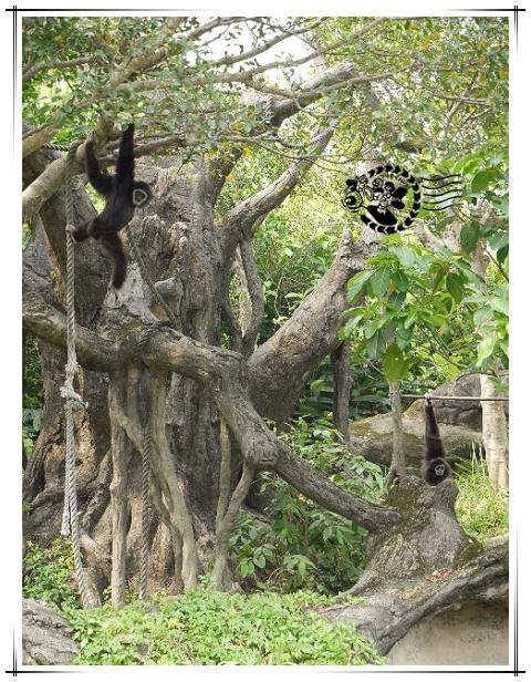 動物園-5.jpg