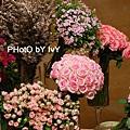 主題區花.jpg