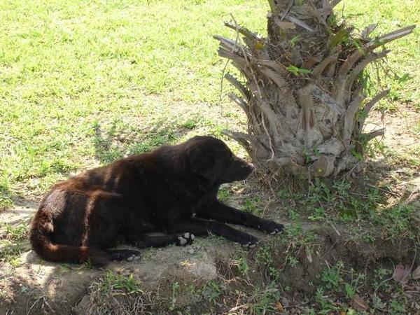 一整群流浪狗中的胖小黑