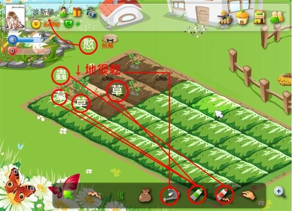 波斯貓農場