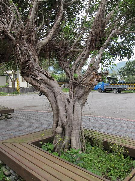 010-廢棄站前的小樹