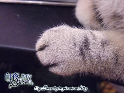 貓掌7.jpg
