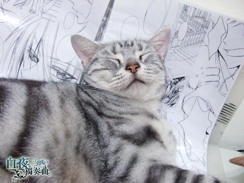 貓7.jpg