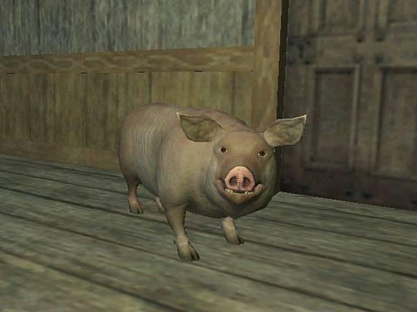 我的小豬豬