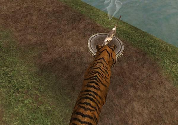 老虎與貓-1