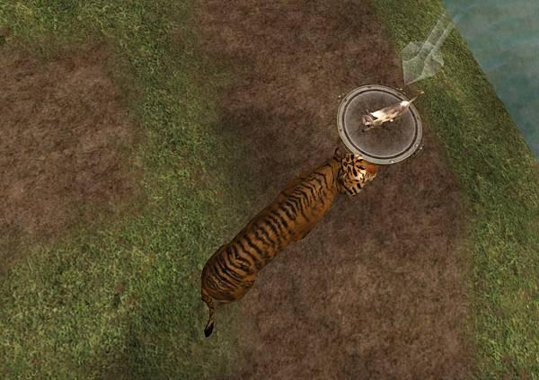 老虎與貓-2