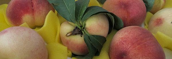 【推薦】梨山。水蜜桃