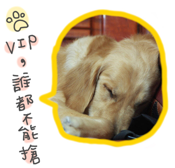 DOG0129-2.jpg