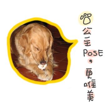 DOG0129-4.jpg