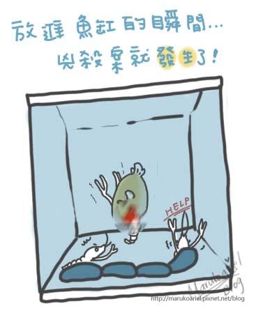 0426_食人魚5.jpg