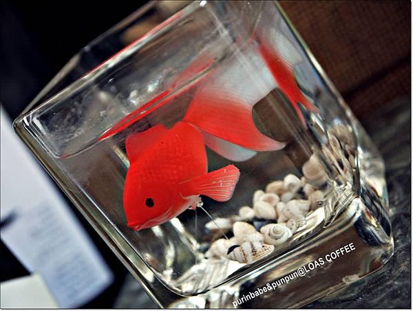 10小金魚.JPG