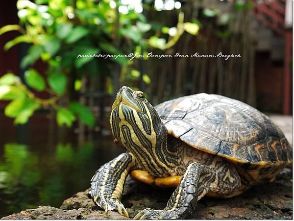 38烏龜.JPG
