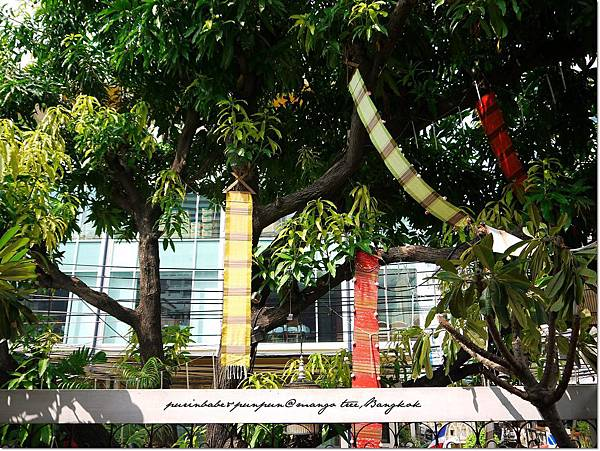 18老芒果樹.JPG