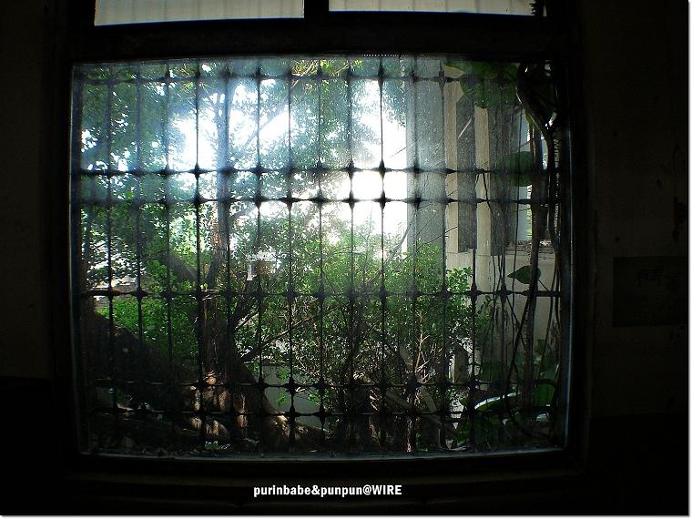 18窗外綠意