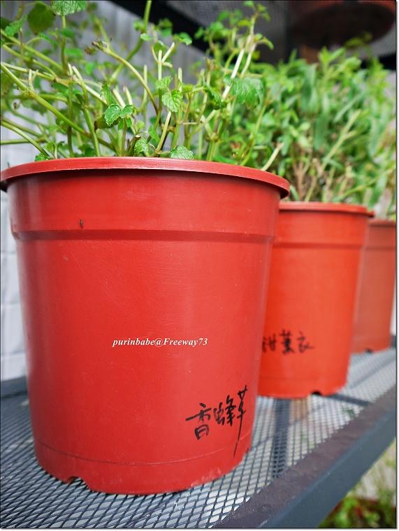 22香草盆栽